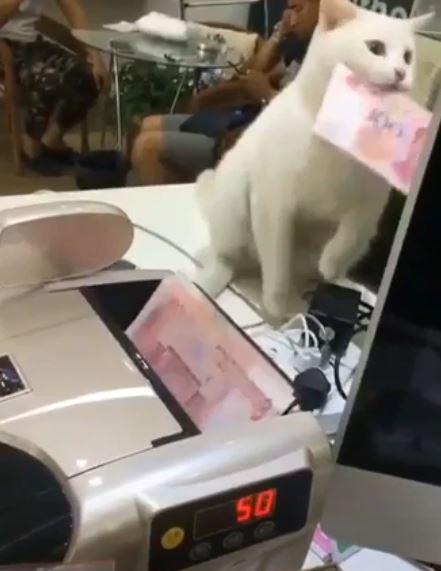 お札カウンターから紙幣を抜き取る猫がまるでねこ税徴収官
