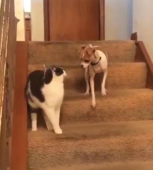 猫が犬をたたいたら偶然やる気スイッチが入ってしまった