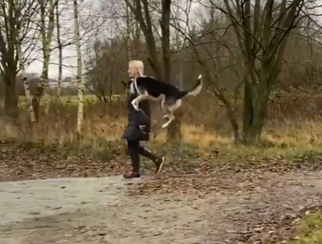 飼い主との散歩が嬉しすぎて肩の高さまでジャンプしまくる犬