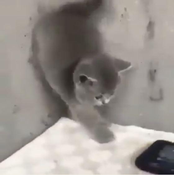 見たことない携帯電話にビビりまくって逃げる子猫最後には逆立ちも