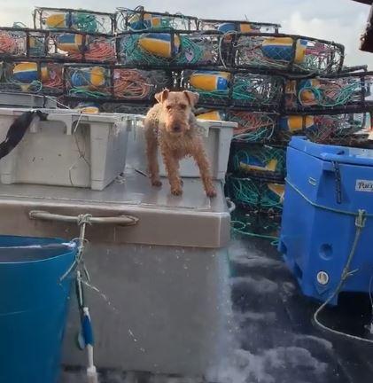 大きく揺れる船上で平気な顔して体重移動がクールな犬こと船乗リーヌ