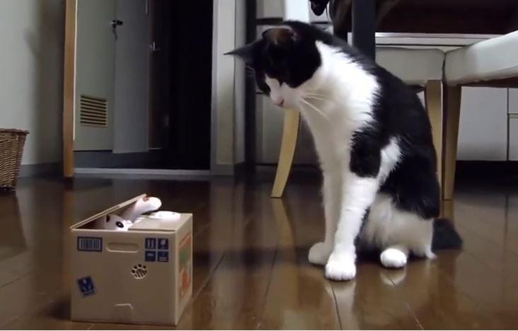 コインを回収する猫のおもちゃが気になる猫