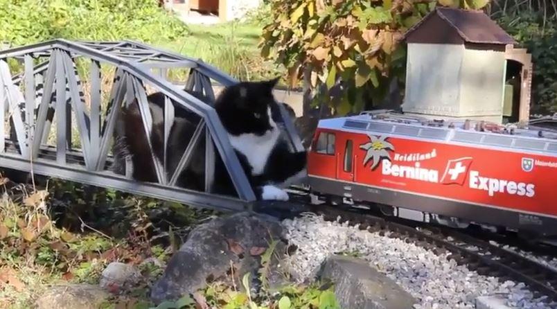 自宅の庭に自作した電動鉄道模型と高架上に居座る猫が対峙