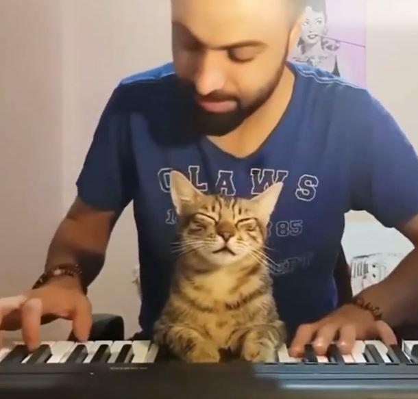ピアノにうっとりする猫