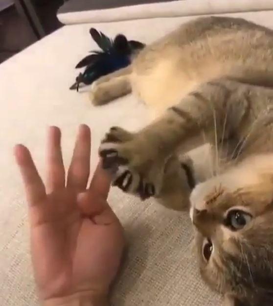 猫と手比べ