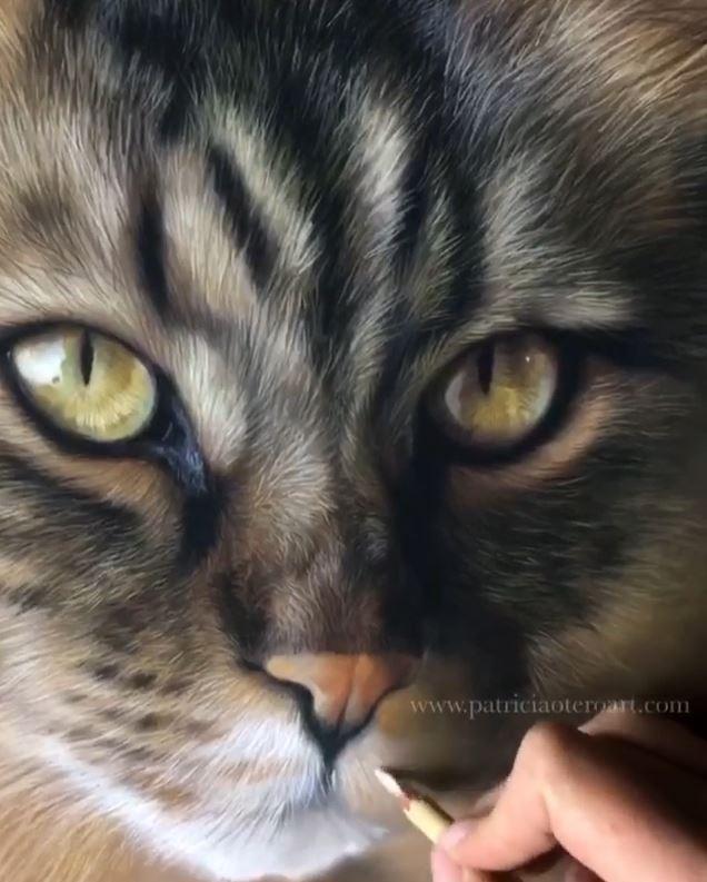 超リアルな猫の絵を描くアーティスト