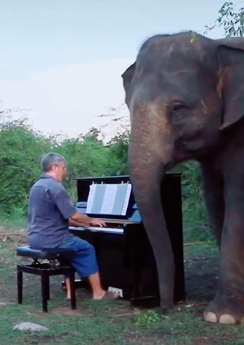 保護象のためにピアノ演奏を聴かせるポールバートンさん