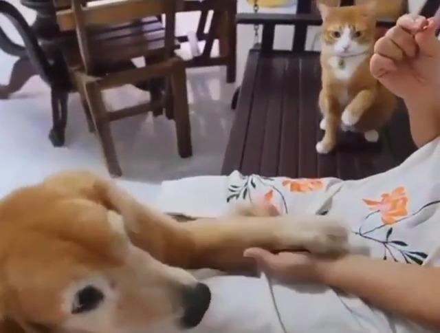 犬のお手にシンクロする猫